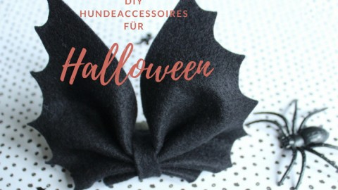 Halloween Hundeaccessoires