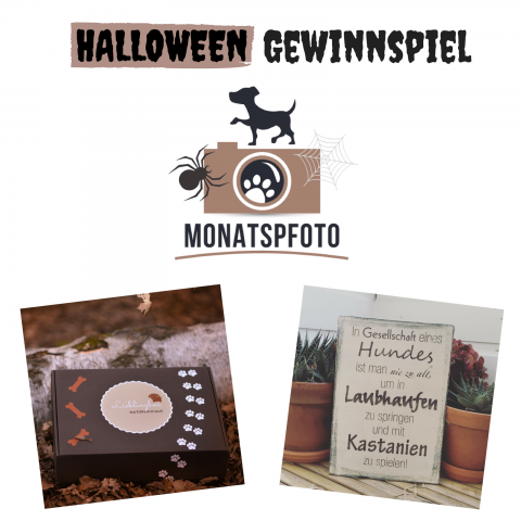 Halloween Monatspfoto September || Oktober 2017