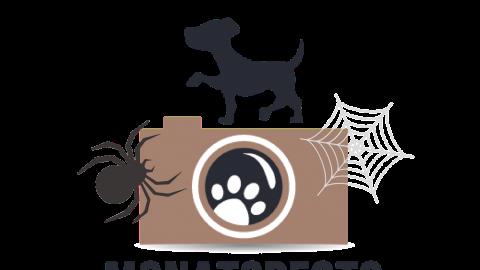 Halloween Monatspfoto September || Oktober 2017