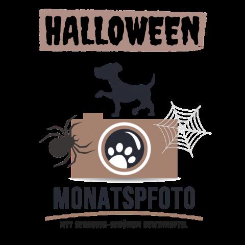 Halloween Monatspfoto September    Oktober 2017
