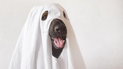 Halloween: 5 abgefahrene Ideen für dich und deinen Hund