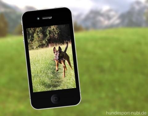 Das Handy im Hundetraining: so erleichtert das Smartphone dein Training