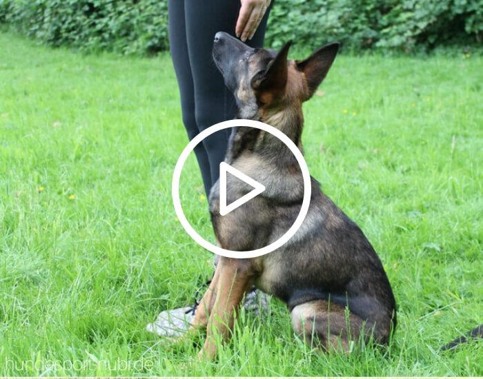 Handy beim Training - Hundesport Nubi - Onlineshop für aktive Hunde