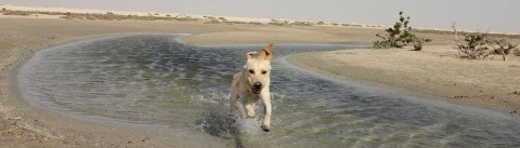 Walking down old memory lane oder Hundeliebe – So kam euer Hund zu euch
