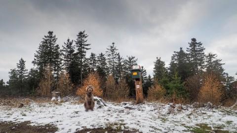 Kaiserkrönung Bobby I. – Wandern mit Hund im Harz