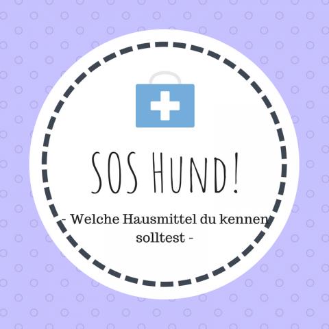 SOS Hund: Welche Hausmittel du kennen solltest [Werbung]