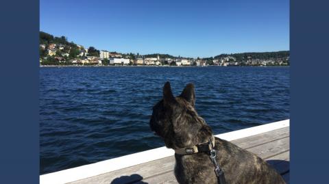 Insidertipp: Hundeurlaub bei der Wasnerin in Bad Aussee – Teil 3