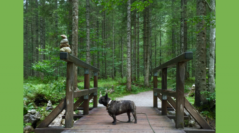 Insidertipp: Hundeurlaub bei der Wasnerin in Bad Aussee – Teil 2