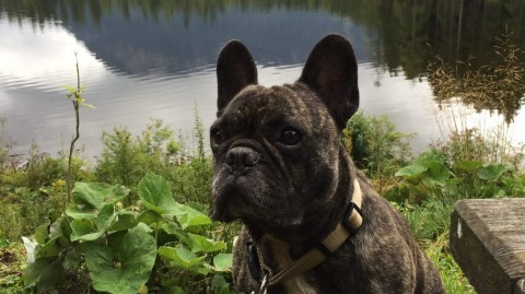 Insidertipp: Hundeurlaub bei der Wasnerin in Bad Aussee – Teil 1