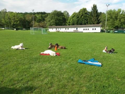 Intensiv Seminar Mensch-Hund-Beziehung
