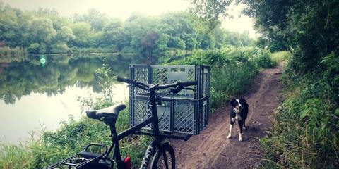 Fahrradtour mit Hund – Darf mein Hund am Fahrrad laufen?