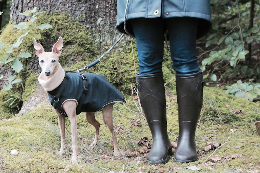 Herbst mit Hund Gummitstiefel Tipps Aigle