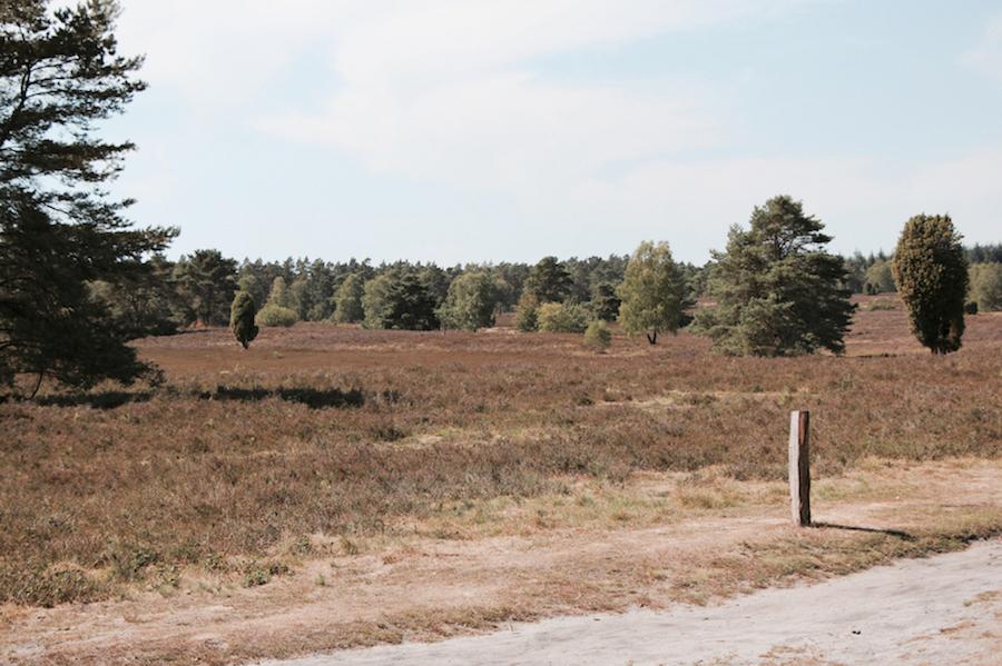 Herbst mit Hund Gummitstiefel Tipps Heide