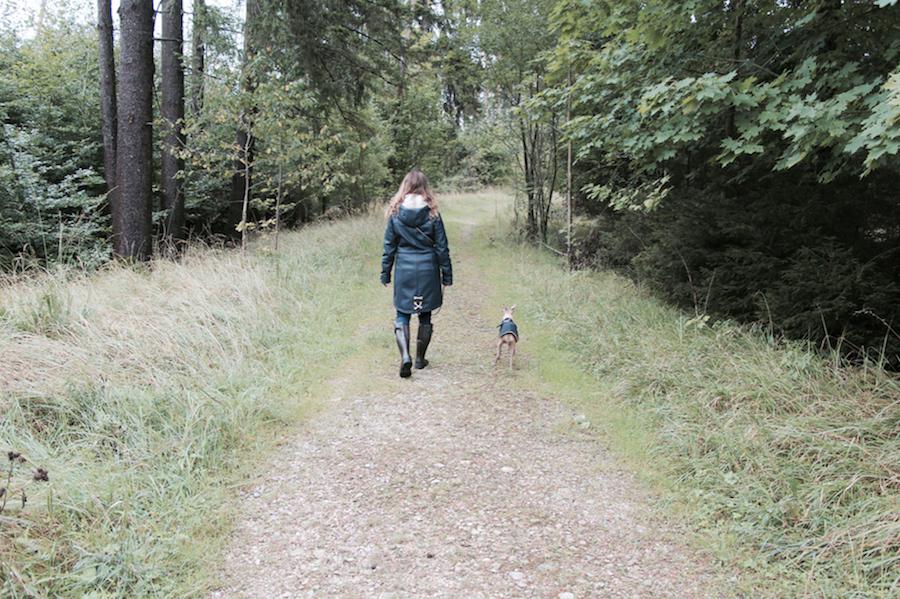 Herbst mit Hund Gummitstiefel Tipps Wald