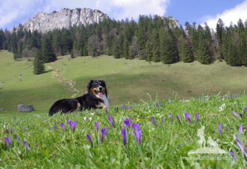 Unsere vier schönsten Frühjahrstouren mit Hund (Bayern – Österreich)