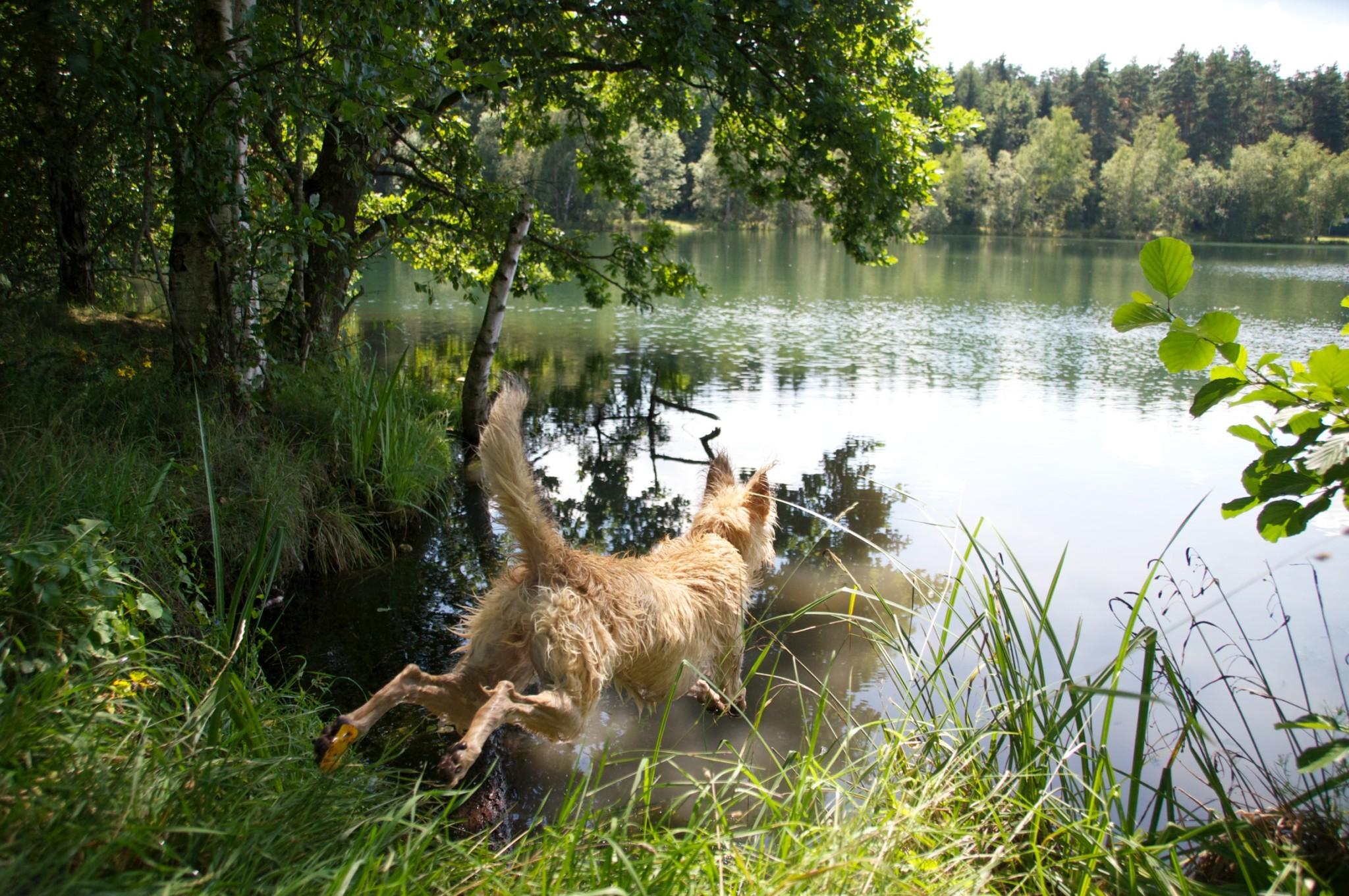 Sommerpause Hundeblog