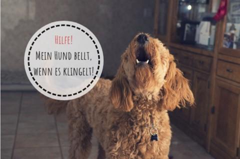 Hilfe! Mein Hund bellt, wenn es klingelt!