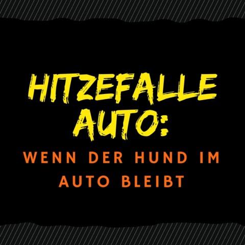 Sommer, Sonne, Hitzeschlag – Todesfalle Auto