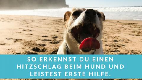 5 wertvolle Tipps: Hitzschlag beim Hund – was ist zu tun?