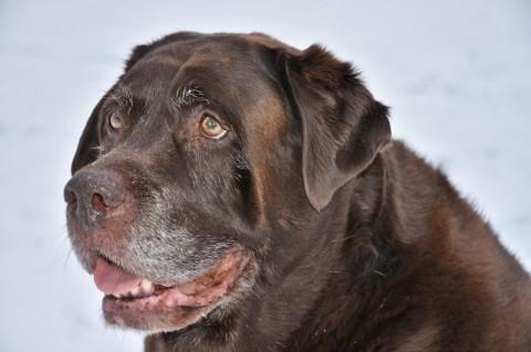 Ursachen und Folgen von Übergewicht beim Hund