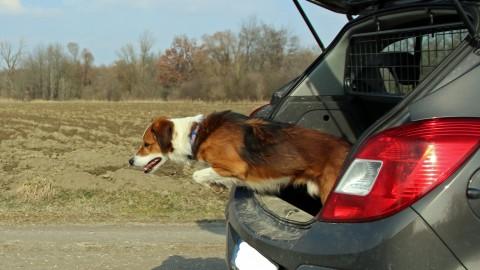 Kofferraum auf! Hund raus!