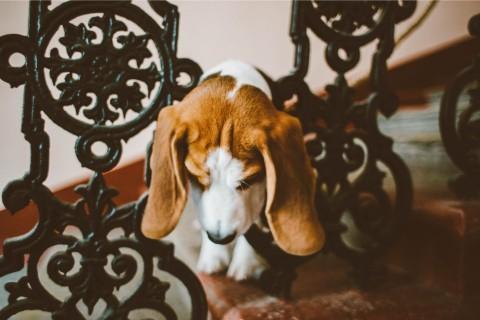 Allergien beim Hund – wie sie entstehen und was das Futter dabei für eine Rolle spielt