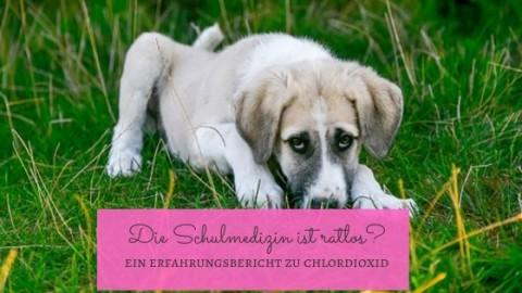 Hundegesundheit – Chlordioxid