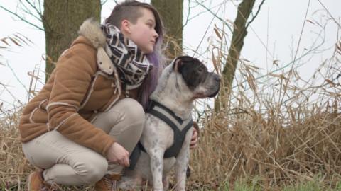 Bürohund on Tour – Grundlagen für Geschäftsreise mit Hund