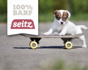 Hundesport miDoggy - welche Sportart passt zu dir und deinem Hund
