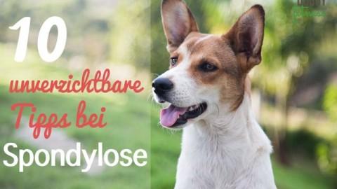 10 unverzichtbare Tipps, wenn dein Hund unter Spondylose leidet!