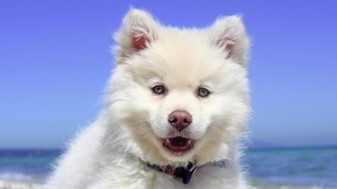Der sichere Umgang zwischen Kindern und dem (fremden) Hund