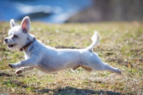 Verstauchung beim Hund – so handelst du richtig!