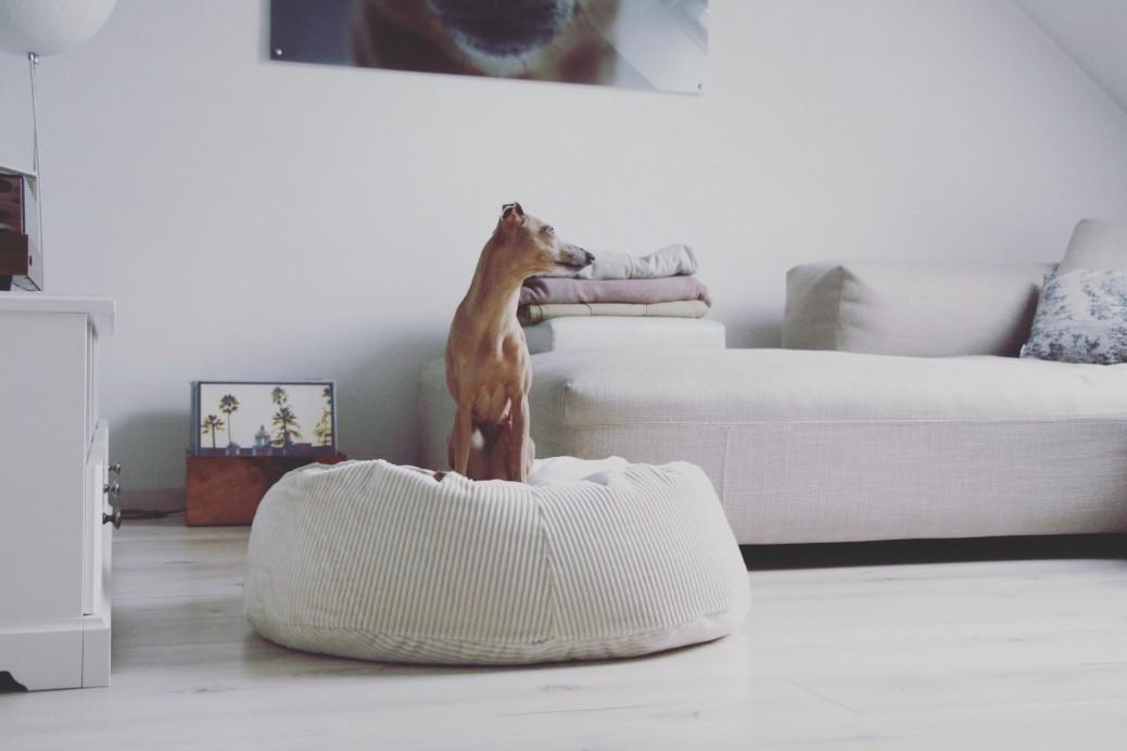Hund allein daheim so entspannt geht s [Anzeige]