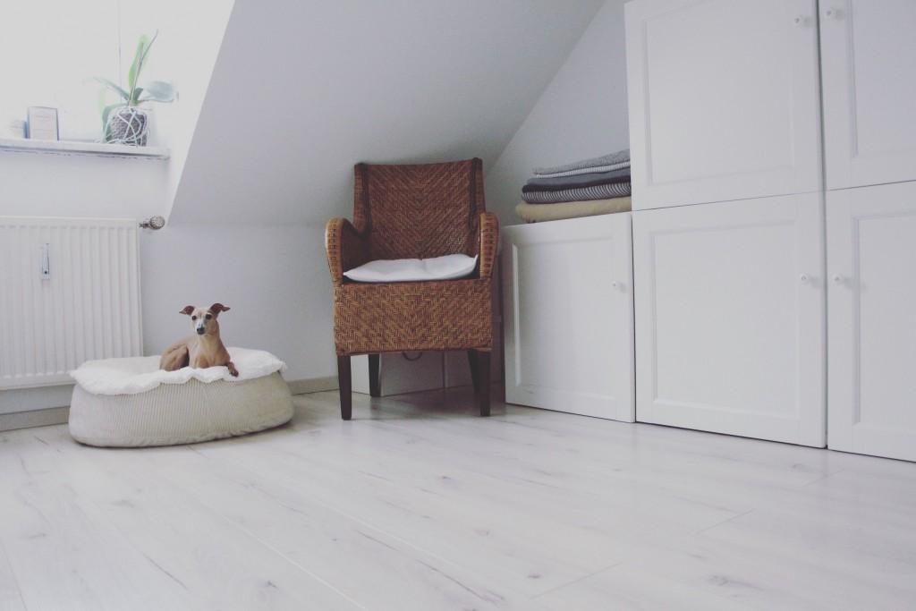 hund allein daheim so entspannt geht 39 s anzeige. Black Bedroom Furniture Sets. Home Design Ideas