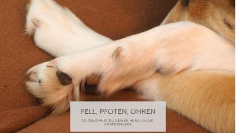 Fell, Pfoten, Ohren – So gewöhnst du deinen Hund an die Körperpflege