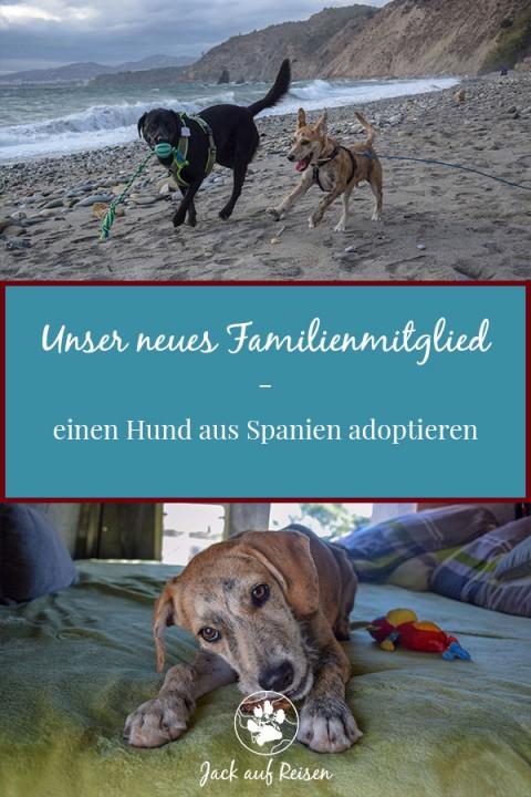 Unser neues Familienmitglied – einen Hund aus Spanien adoptieren