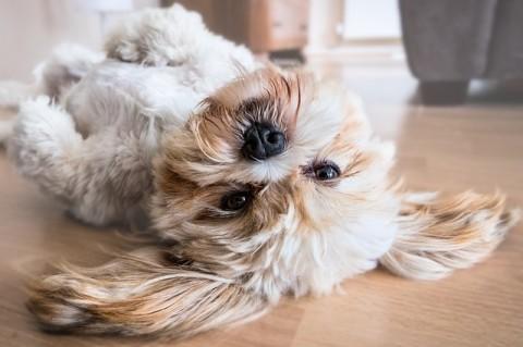 9 Zeichen, die zeigen, dass dein Hund gesund ist!