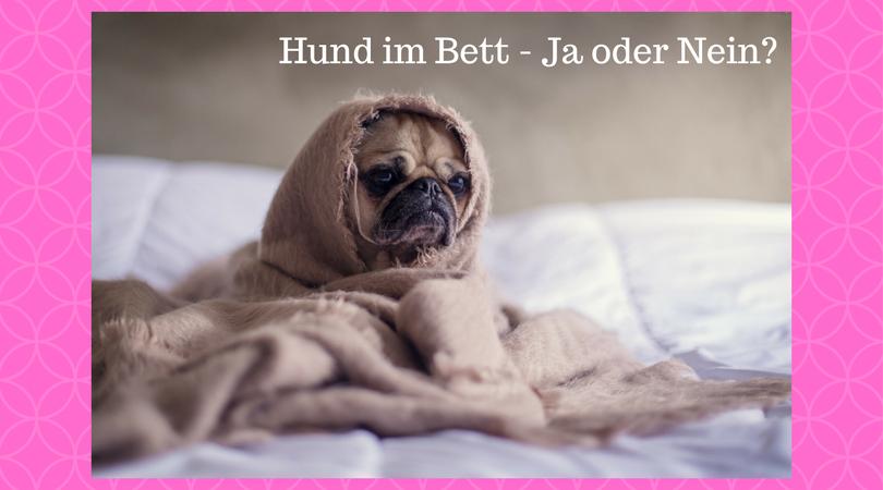 Hund im Bett - Ja oder Nein_