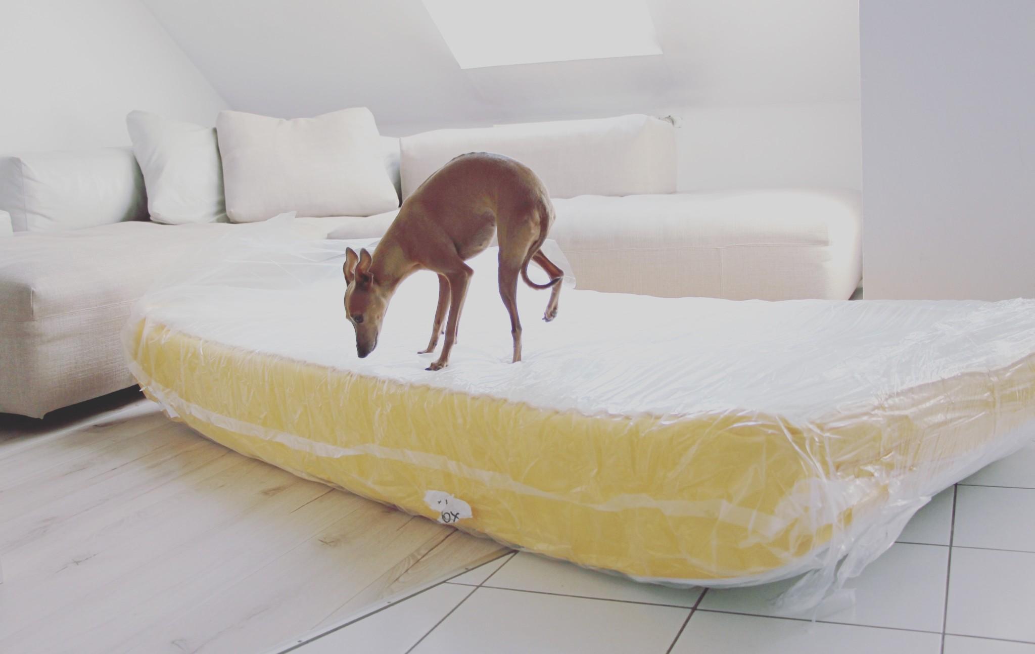 Hund im Bett ja oder nein
