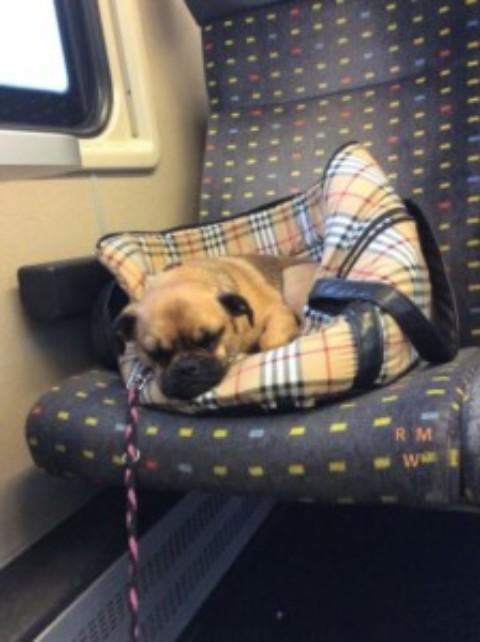Zug fahren mit Hund – Wie Mia das lernte