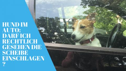 Hund im heißen Auto: Darf ich rechtlich gesehen die Scheibe einschlagen?