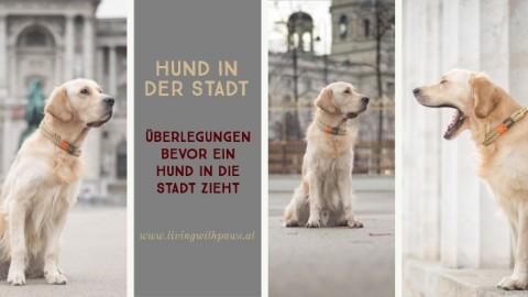 Hund in der Stadt – geht das?