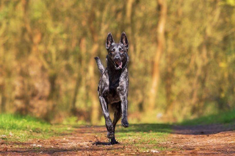 Hund-ohne-Leine