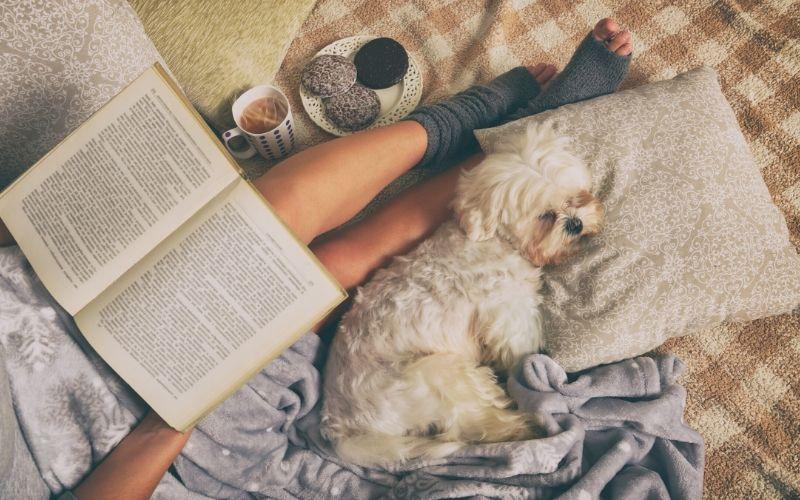 Hund und Corona