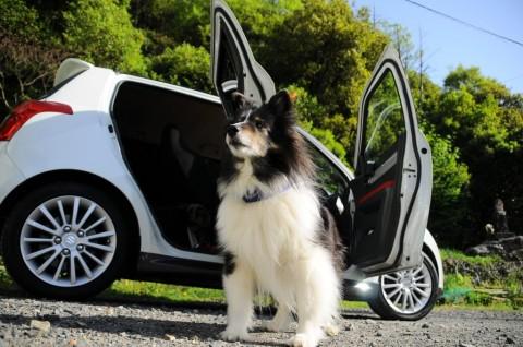 Dein Hund will nicht mehr ins Auto springen? – Das können die Gründe sein!
