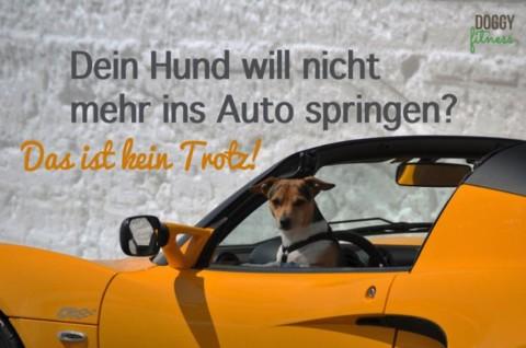 Dein Hund will nicht mehr ins Auto springen? – Das ist kein Trotz!