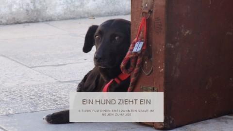 8 Tipps für den Einzug eines (neuen) Hundes