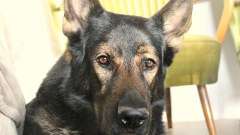 Hund zuhause beschäftigen: die besten Indoor Spiele für Hunde