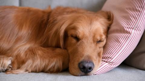 Woran erkenne ich, dass mein Hund gestresst ist? Die Symptome!