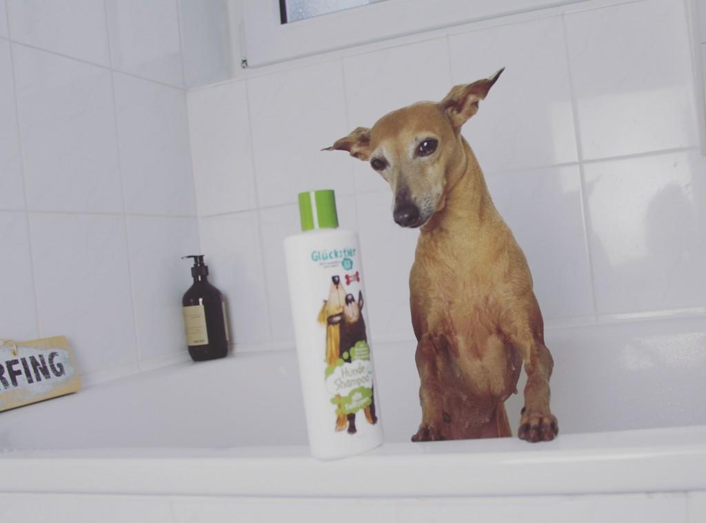 Hunde Baden einfache Tipps